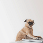 dog looking at computer as if he is a new investor