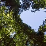 The Canopy of this Forest has a Heart Shaped Hole showing Blue Sky