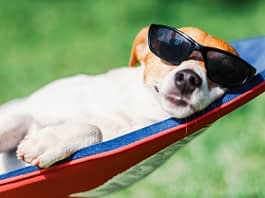 Dog lives the retired life on a deck-chair in sunglasses